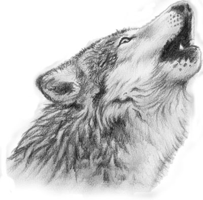 Indian Wolf Tattoos